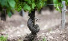 Le vin du rhône, un vin de privilèges