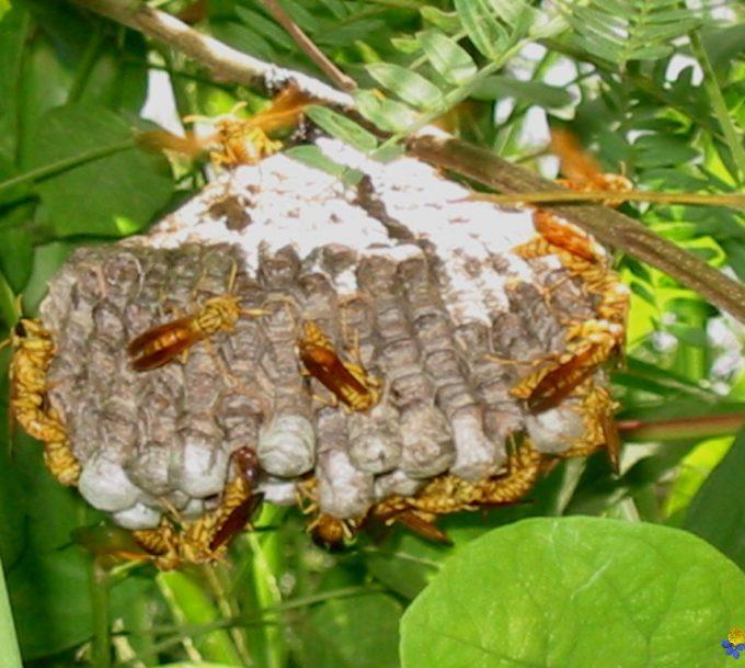 Comment détruire un nid de guepes dans le sol ?